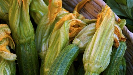 Zucchini (courgette) and ricotta sauce
